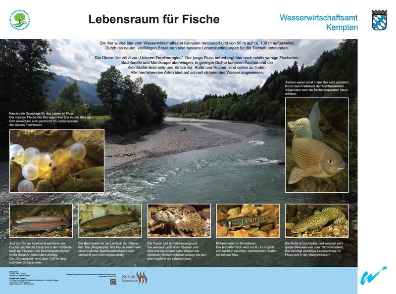 Infoweg iller wasserwirtschaftsamt kempten for Lebensraum fische